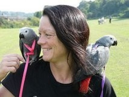 صور Lovely African Grey Parrots Ready For A New Home 1