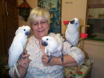 WELL TRAINED cockatoo PARROTS