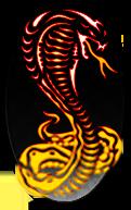 جهاز كشف الذهب الأحدث عالميا www.OrientDetectors.com - COBRA LRL